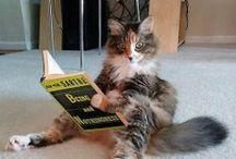 Cats and Books / Cats and books just go together.  Some of us write books, (like me!), and some of us read books, too!