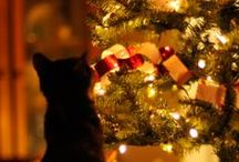 Cats and Christmas / When I first got adopted into my forever home, my brother, Bogart, told me Christmas was the best!  And you know what?  He was right!!!