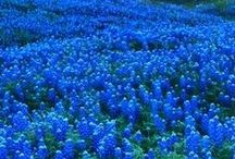 God Bless Texas! / All about the wonders of the Great State of Texas!