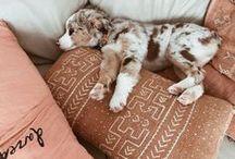 Pets | Cuteness overload