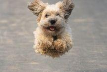 Must Love Dogs / by Sandra Mullikin
