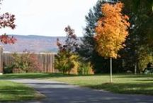 Bennington / Set at the foot of New England's Green Mountains, Bennington's surroundings offer ample opportunity for hiking, biking, swimming, skiing, and other recreational activities in addition to being within easy traveling distance to many cultural centers.