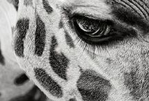 Animals / by Wid Ade