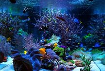 Reef scape inspiration / Bacheca dedicata a tutti gli acquari marini