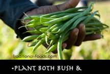 Vegetable Gardening Ideas!