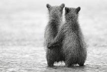 Alaska / by Coley Christina
