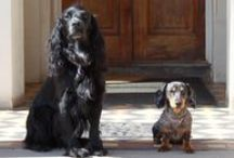 Dog-friendly Breaks in Britain / The 2nd edition of Dog-friendly Breaks in Britain is now out, so here are the places that offer creature comforts to both you and your hound. Special doggie treats include tasty sausages or hand-baked bacon biscuits...