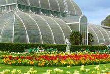 Kew Garden / Kew Garden