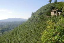 La Marca Trevigiana / Un viaggio tra i luoghi, i colori, i profumi e i sapori della Marca Trevigiana