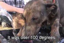 RESCUE/SPCA / Site of Animal videos.