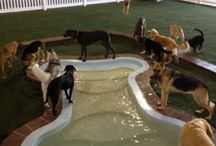 ANIMAL Travel/Spas/Hotels... / How & Where to go with & without your pets.