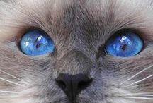 krása očí zvířat