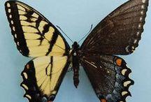 hmyz - nezvyklé zbarvení