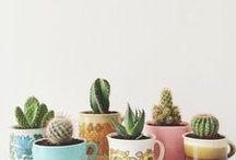 Succulent Craze