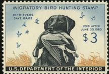 Bird Dog Products / by Lion Country Supply