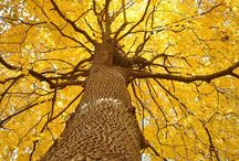 My lovely trees / Non potrei pensare ad un mondo senza alberi ..... sarebbe come amputare lo spirito