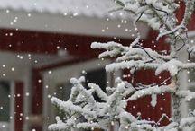 my lovely snowy Winter / La neve porta pace e silenzio nel mio animo
