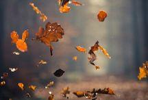 sent of autum leaves / Le foglie .... il loro aroma inconfondibile,  la forma, i colori ..... le amo!!!!