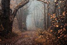 The countenance of forest / Amo le passeggiate autunnali con i cani nei boschi