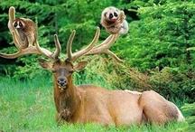 Oh deer....