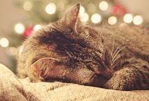 Noël / Magie de Noël : décorations, jolie table et surtout la joie, dans les yeux émerveillés des enfants.