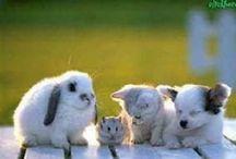 Mici e amici