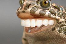Frosch- Deko / Wow hab ich auch