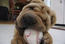 ~♥♥♥♥Sharpei♥♥♥♥~ / Only the best breed of dogs