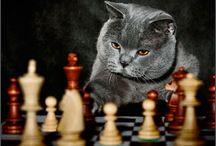 Ancora mici / Gatti