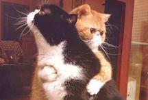 Mici 2 / Gatti