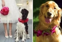 Pets in Weddings. / Do you know of any pets that has attended a wedding? Share a photo with us! If you would like to join this community board please feel free to e-mail me at deb@beachweddingsbydeb.com along with your Pinterest user name.  Please note no spam
