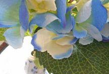 Αγαπημένο Μπλέ. / Οι αποχρώσεις του μπλε στη διακόσμηση η καθεμία  αντανακλά κι ένα διαφορετικό στυλ ανάλογα με τους συνδυασμούς που θα κάνει κανείς. Πάντα όμως το μπλε στο χώρο, σε μικρή ή μεγάλη δόση σε ξεκουράζει και σε ηρεμεί. Επίσης το μπλε είναι το χρώμα που αποπνέει εμπιστοσύνη, οπότε είναι κατάλληλο και για χώρους επαγγελματικούς.