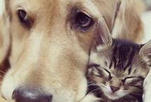 Dogs & Cats... / products, crafts, pictures & more for cats & dogs / by Donna France- Davis