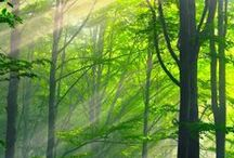 Forest / Beautiful forests and woodlands around the world