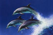 Marine life / Sea life - sea creatures and plants - marine fauna and flora