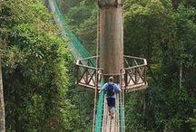 Eco tourism / Green travel and tourism - ecotourism