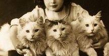 Kitty cat!