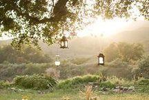 Garden/outdoors / Garden ideas, flowers and outdoor spaces