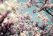 Flowers / Blossom, wild flowers & garden flowers