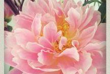 fleurs et couleurs.. / Fleurs, Flowers, photographie, tendance,