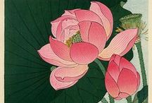 цветы лотосы