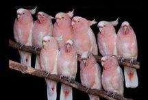 птицы попугаи