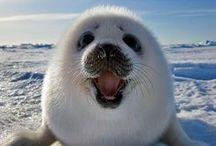 Animals / Funny Animals,Cute Animals,