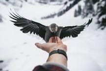 Amazing Photograph / photo, beautiful photo,amazing photo,photograph tips,how to photo,camera work