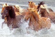 Horses Are Happy!  / by Carolyn Parsons