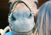 HORSEY SHIZ
