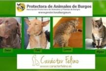 Salva una vida / Animales en adopción de varias protectoras de España.  Gracias por considerar la adopción de animales sin hogar.