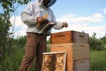 Bees & Honey / Honey recipes & working the hives