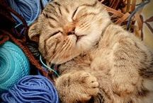 Cats and Yarn / by Yarnspirations