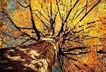 ❧ Trees… Nature's Magic ❧